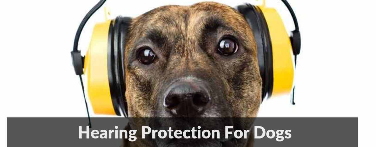 Hearing Protection For Dogs 1