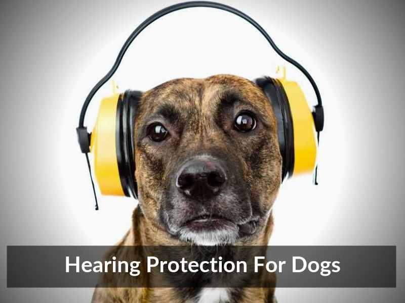 Hearing Protection For Dogs