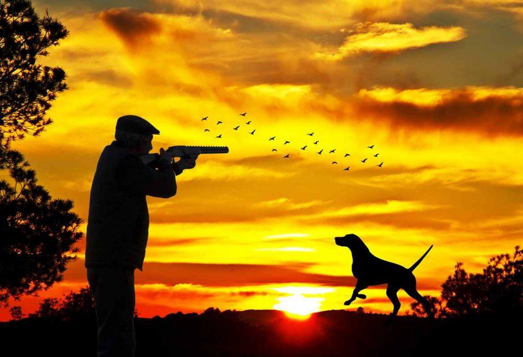 duck hunter sunset