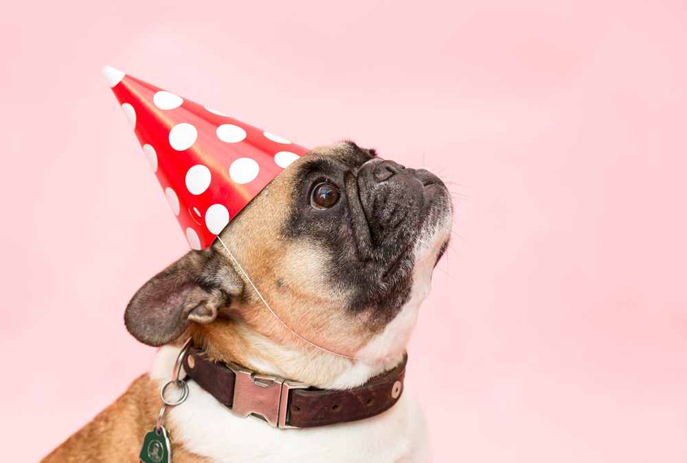 Lound parties may need dog ear muffs for noise