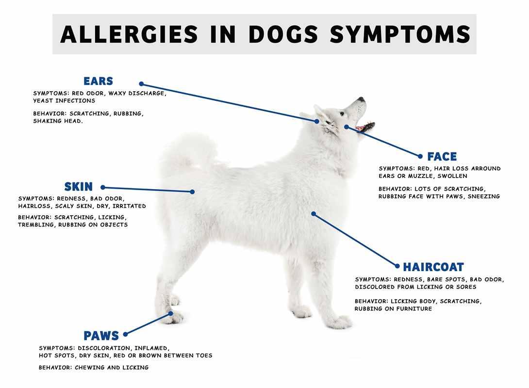 Dog allergy poster0