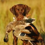 Hearing & Hunting: Best Hearing Protection for Duck Hunting