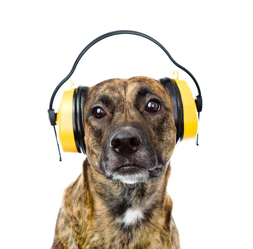 Hearing Protection for Dogs: Best Noise-Cancelling Options