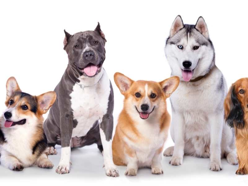How can I improve my dog's hearing? Deafness In Dogs!