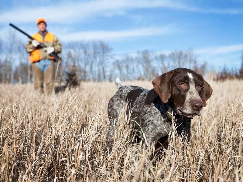 Best Ear Protection For Bird Hunting