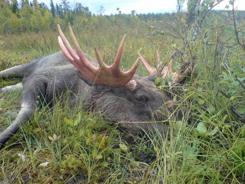 Ear Protection When Hunting Moose