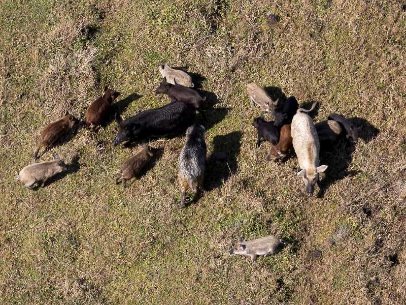 Best Earplugs For Hunting Wild Hog